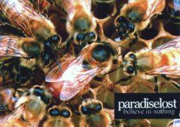 Roadie Metal Cronologia: Paradise Lost – Believe In Nothing (2001)